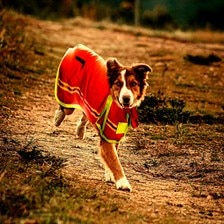 Petsafe Fire Retardant Dog Jacket