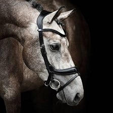 PS of Sweden Paladin Bridle