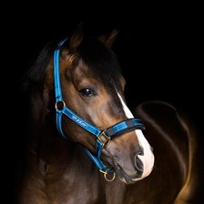 Stubben Stable Halter with Reflecting Thread
