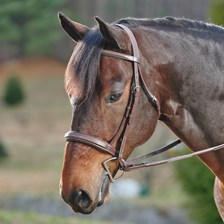 Harwich® Square Raised Padded Hunter Bridle
